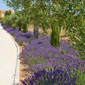 Bon Thérapie Tui Na à l'Hôtel Solverde Spa & Wellness