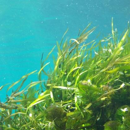 aPresente de embrulho de algas verdes no Hotel Eurostars Gran em La Toja