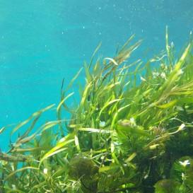 Envoltura en Algas en Hotel Eurostars Isla de La Toja